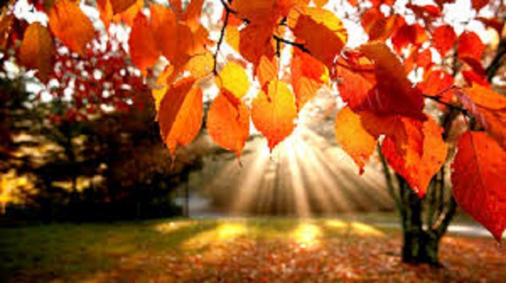 jesień-obrazek